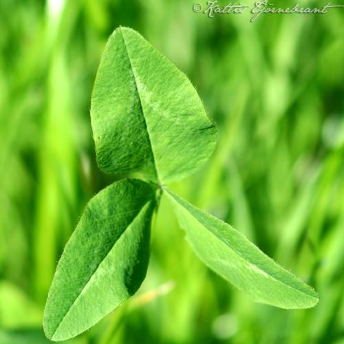 Grön onsdag